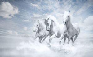 white_horses